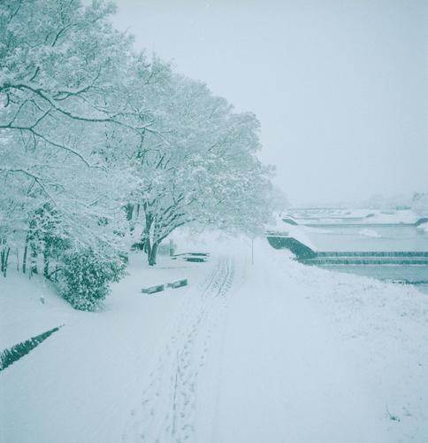 Rolleiflex253.jpg